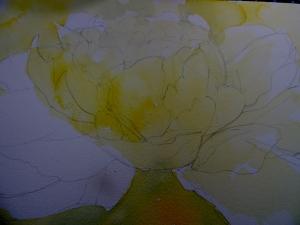 white flower 014