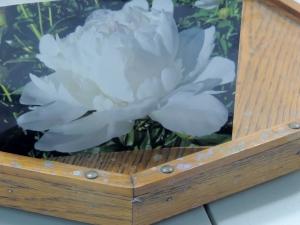 white flower 017