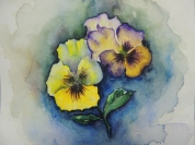 Day 15 Pansies