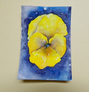 Day 23 Yellow pansy